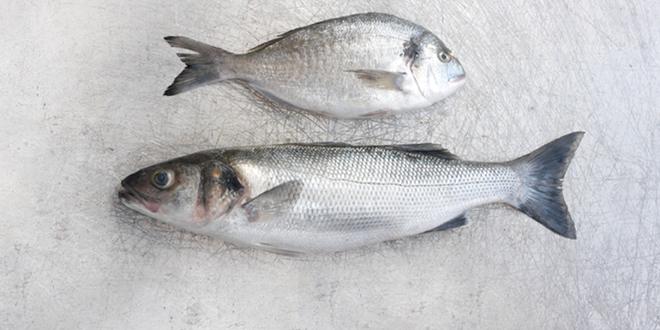 fishmonger-0