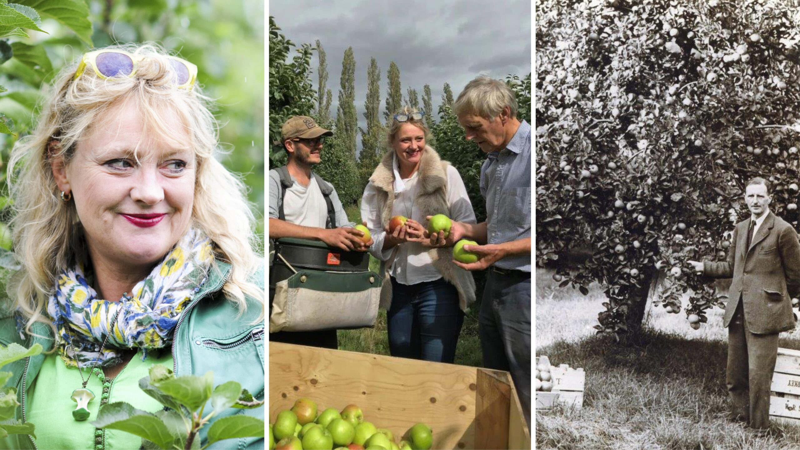 Starkey's Bramley Apples