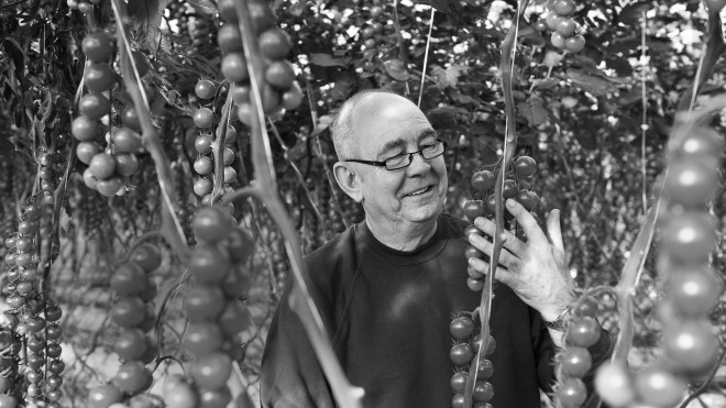 Brian Ascroft, Tomatoes