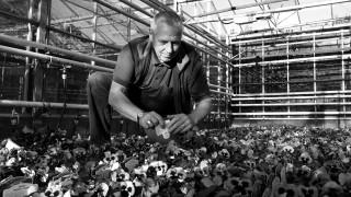 Duncan Taylor, Plants